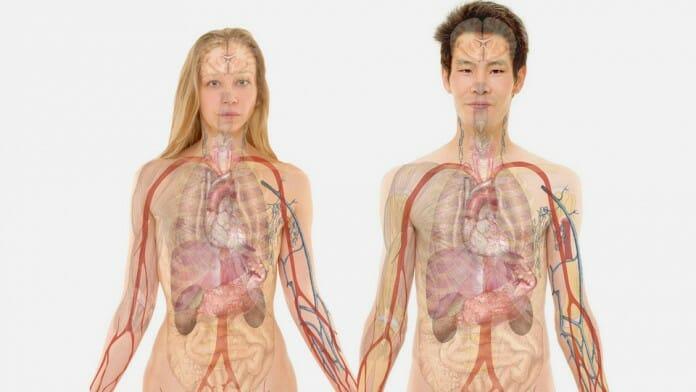 anatomi kpk