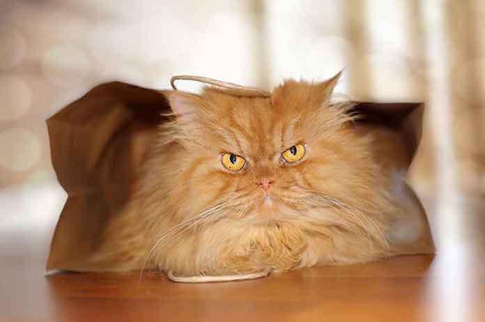 kayıp kedi betü gubse ozay