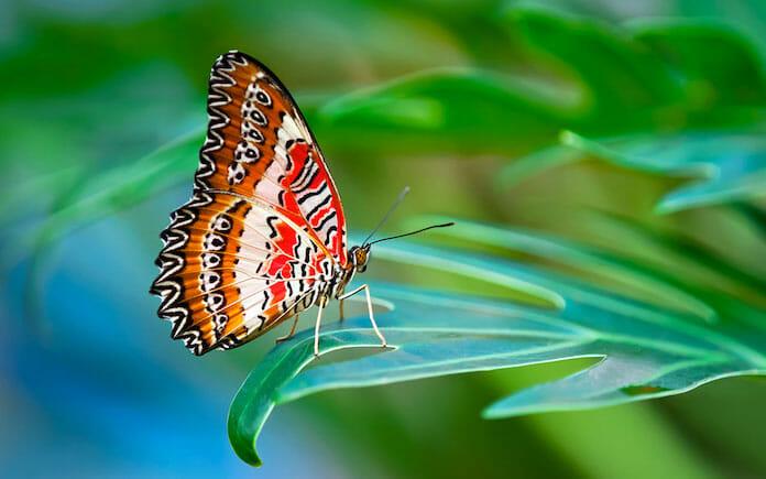kelebekler ayaklarıyla tat alır