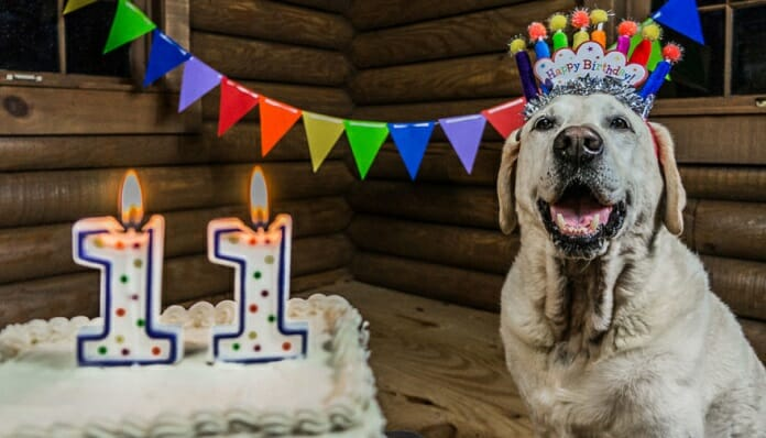 motorcycle dog celebrates th birthday on the road