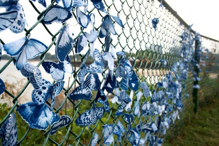 tasha lewis cyanotype butterfly installation  edit